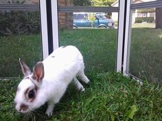 Zoe. Dwarf bunny rabbit hopping loving summer