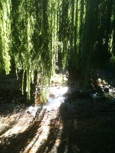 willow trees = Want & Love!!