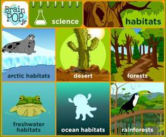 Habitat Activities and Lesson Ideas with a FREEBIE- hands-on crafts for kids and reading comprehension for a and grade habitat science unit study. Primary Science, Science Topics, Kindergarten Science, Science Lessons, Science Ideas, Science Fair, Life Science, Science Experiments, Preschool