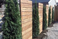 Pine Tree And Wood Panels Luxury Privacy Fence backyard privacy Top 50 Best Privacy Fence Ideas - Shielded Backyard Designs