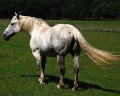 Percheron... use to ride one named babe..my favorite horse to ride.. :)