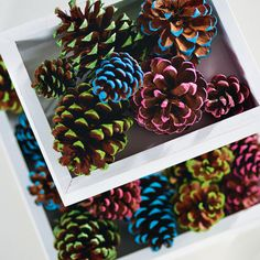 Give your Christmas decor a pop of bright color with these nature inspired painted pinecones.