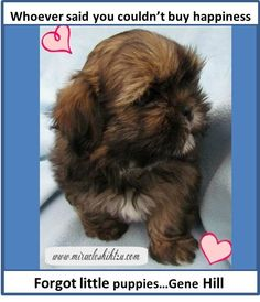 Love Quotes about Dogs?  Find more just like this at Miracle Shih Tzu http://miracleshihtzu.com/dog-quotes.html