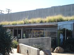drought tolerant grasses on an awning rooftop.