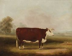 Hereford Cow, by William Henry Davis. 1857.