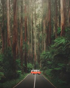 Not just coastline and coral reefs, Australia's home to some of the lushest forests in the world—including this stretch known as Black Spur Drive outside of Yarra Ranges National Park. Beautiful Forest, Beautiful Places, Marshmello Wallpapers, Van Life, Destination Voyage, Volkswagen Bus, Victoria Australia, Travel And Leisure, Australia Travel