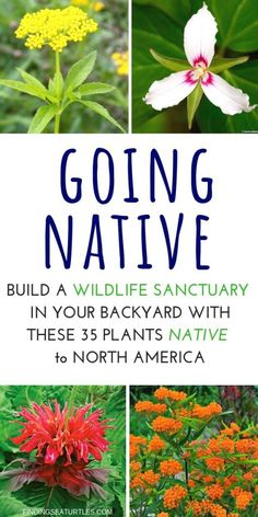 How to Create a Wildlife Sanctuary With Native Plants Select a location for your wildlife sanctuary that provides both Sun and shade. Create a wildlife sanctuary by providing basic food, water, and shelter. Florida Native Plants, California Native Plants, Florida Landscaping, Florida Gardening, Landscaping Ideas, Garden Landscaping, Landscaping Equipment, Jm Barrie, Organic Gardening Tips