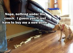 Funny Pictures Of The Day