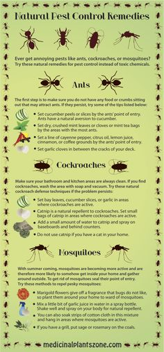 Natural Pest Control Remedies Infographic