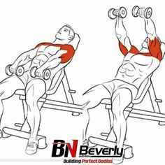 Shoulder & Traps Exercises Ejercicios de Hombro y Trapecios Heavy weight lifting session for back. 20 sets outlined with example weights which will give your back a high intensity workout. Weight Lifting Workouts, Gym Workout Tips, Chest Workouts, Dumbbell Workout, At Home Workouts, Workout Fitness, Fitness Exercises, Quad Exercises, Weight Exercises