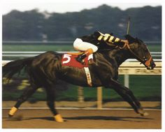 seattle slew <3