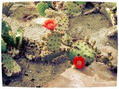 Ethel M. chocolate factory and cactus garden.