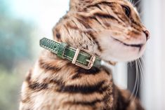 Handmade leather cat collar with breakaway safaty buckle Dimensions: * Width: cm * Total lenght: 32 cm * Neck size adjustable 23 - 29 cm Leather Cat Collars, Breakaway Cat Collars, Unique Animals, Kind Words, Cat Gifts, Your Pet, Cats, Yellow Birthday, Dog Collars & Leashes