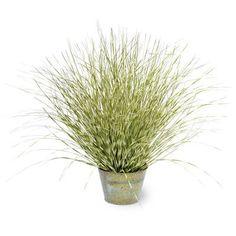 Beachcrest Home Green Zebra Grass in Round Metal Pot