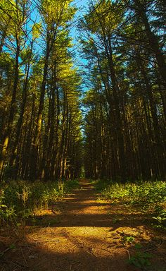 ✮ A Walk in the Pines