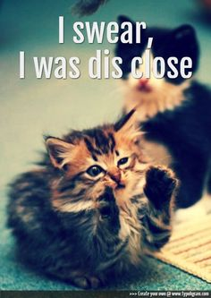 I know, so cute. #funny #kitten #words