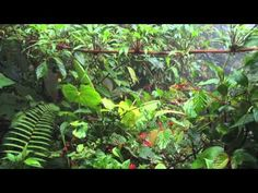 ▶ Jungle Natural Sound 11 Hours - Exotic Jungle natural sound for relaxation, yoga, sleep, reading - YouTube