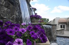 Anthonys Pier 9 Water Feature Garden Pond 1: Have your Party at Anthonys Pier 9 in New Windsor, Orange County, NY. Hickory Hollow Landscapers has created three great landscapes & water feature garden ponds for your enjoyment!  The garden ponds have been created out of Pa. colonial boulders for those who love the natural look and maplebrook granite veneer for those who are more formal.  This water feature has purple petunias cascading over it.