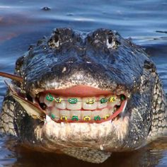 We only put braces on our human patients, but can you imagine how good a croc would look with straight teeth?