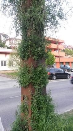 zöld fal működő villanyoszlopból