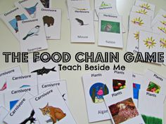 Printable Food chain game from Teach Beside MeYou can find Food chains and more on our website.Printable Food chain game from Teach Beside Me
