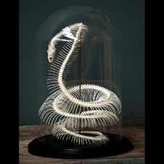 the photo links to a blog post. The shop is: Objet de curiosite ( http://www.objetdecuriosite.fr )