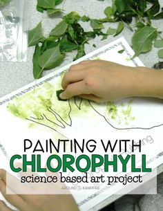 Chlorophyll Paintings: Incorporating Art in Science - Around the Kampfire