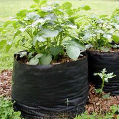 Tater Totes: DIY fabric pots for potatoes & other plants (from landscape cloth)