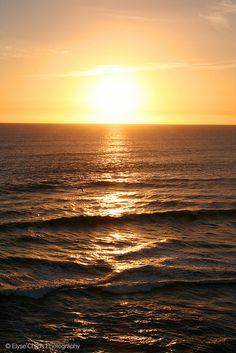Sunset from Muriwai Beach New Zealand Beach, Auckland, Wanderlust, Sunrises, Landscape, Beaches, Photography, Outdoor, Facebook