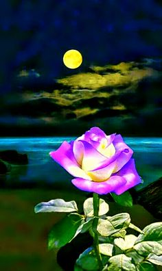 ...Moon bloom. Exquisite ! Beautiful Moon, Beautiful Roses, Easy Paintings, Your Paintings, Moon Images, Classic Artwork, Beautiful Flowers Wallpapers, Lavender Roses, Flower Wallpaper