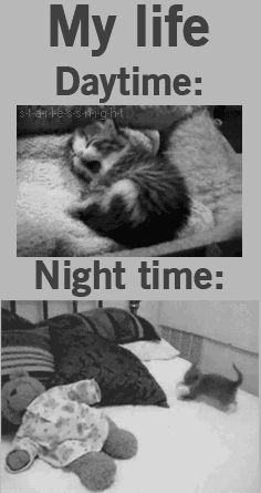 All the time mignon, funny cat memes, gifs hilarious, funny kitties, funny I Love Cats, Crazy Cats, Cute Cats, Funny Kitties, Cat Fun, Pretty Cats, Beautiful Cats, Funny Animal Pictures, Funny Animals