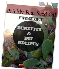 "Prickly Pear Seed Oil is being touted as the ""new argan"" oil- the newest beauty oil secret to treat fine lines & wrinkles (benefits & recipes) Prickly Pear Recipes, Prickley Pear, Essential Oil Carrier Oils, Cactus Seeds, Oil Benefits, Skin Food, Beauty Recipe, Oils For Skin"