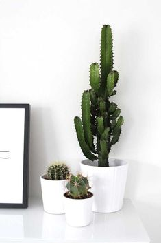 34 Classy Small Cactus Ideas For Interior Decorations - Cacti are the best types of indoor or outdoor plants. Cactus grows properly without too much attention and care from you. It is among the draught-resi. Deco Cactus, Cactus Pot, Cactus Decor, Plant Decor, House Plants Decor, Cacti And Succulents, Potted Plants, Indoor Plants, Succulent Plants