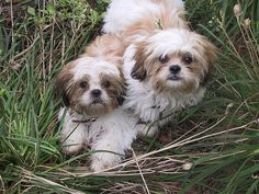 Cute puppy and dog - http://www.1pic4u.com/blog/2014/12/22/suesse-hundebabys-230/