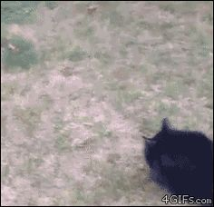 Funny cats - part 232 (40 pics + 10 gifs)