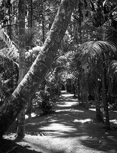 Tropical Spice Plantation Goa, Goa