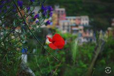 Spring of Manarola