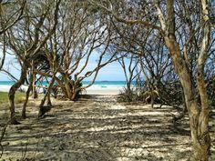 The path onto Home Beach, North Stradbroke Island. Stradbroke Island Camping, Beach Camping, Teenage Dream, Island Beach, Home And Away, Australia Travel, The Locals, Beaches, The Good Place