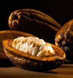 De la Fève au Chocolat :  Les Fèves sont entourées d'un mucillage blanc, qui doit être supprimé par fermentation durant  3 à 8 jours.