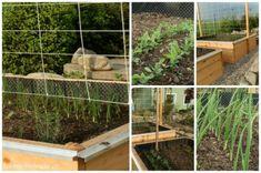 Pěstování zeleniny, které by vám záviděly i vaše babičky – KVETOUCÍ ZAHRADA Plants, Compost, Plant, Planets