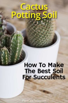 A good cactus potting soil is nutrient-rich soil with the right combination of soil aeration and drainage properties. [LEARN MORE] art garden indoor plants Potting Soil For Succulents, Succulent Soil, Succulent Landscaping, Growing Succulents, Cacti And Succulents, Planting Succulents, Succulents Wallpaper, Succulents Drawing, Potted Flowers