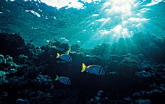 Underwater. Photo by Ole Sondergaard.