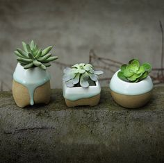 Succulent Planter Dropping Glazed Craft Ceramic by MarukoCoco