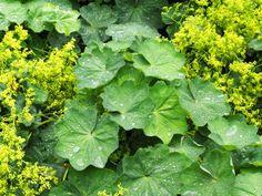 Nutrition for a better life Herb Garden, Vegetable Garden, Health And Nutrition, Health Fitness, Atkins Diet, Health Advice, Better Life, Life Is Good, Korn