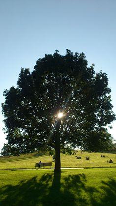 Tree in Primrose Hill park, London (LW35)