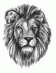 Lion Tattoos, Designs And Ideas : Page 124