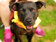 Detroit, MI - Terrier (Unknown Type, Medium) Mix. Meet Teneil, a dog for adoption. http://www.adoptapet.com/pet/8769561-detroit-michigan-terrier-unknown-type-medium-mix