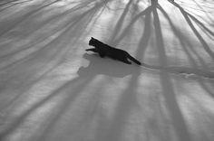 normablackandwhite:  Photograph: Alex Howitt