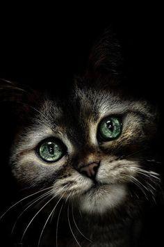 <O verdadeiro gato de botas,ou imitação.