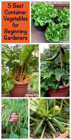 Is it your first year gardening? All you have is a tiny patio? No worries! Here are my 5 favorite container vegetables for beginning gardeners, plus container gardening tips and tricks for a great harvest. #containergardenforbeginners